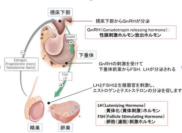 子供の成長ホルモン治療12