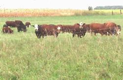 wacholz_farm_meat_grass-fed_2