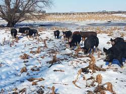 pigs_wacholz_farm_snow