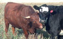 wacholz_farm_meat_grass-fed_together