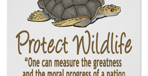 PROTECTION OF SEA TURTLES: AN ANALYSIS OF OLIVE TURTLE