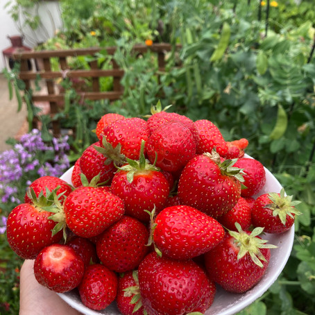 My June Garden