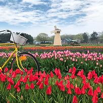 TulipFestival Full Shot.jpg
