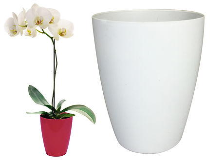 Adobe - Blush Red Orchid and white.jpg