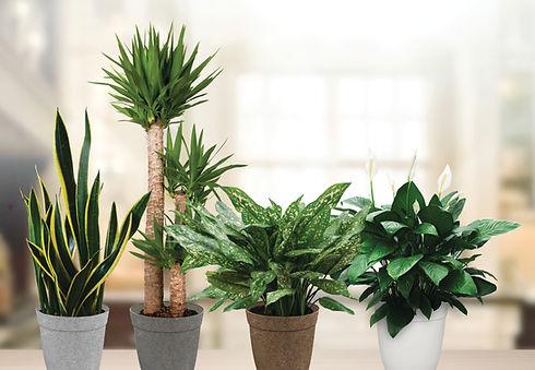 tropicalfoliageDelilahbg.jpg