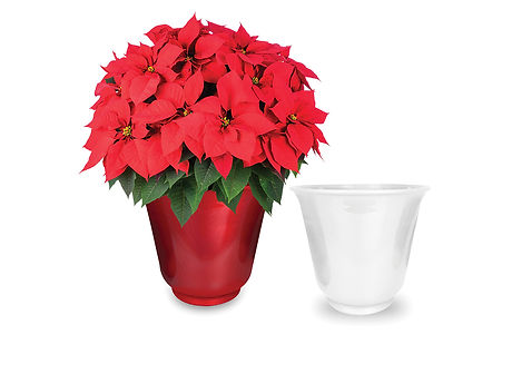 hdsnew2_0013_13IN Florence christmasred 2pots.jpg