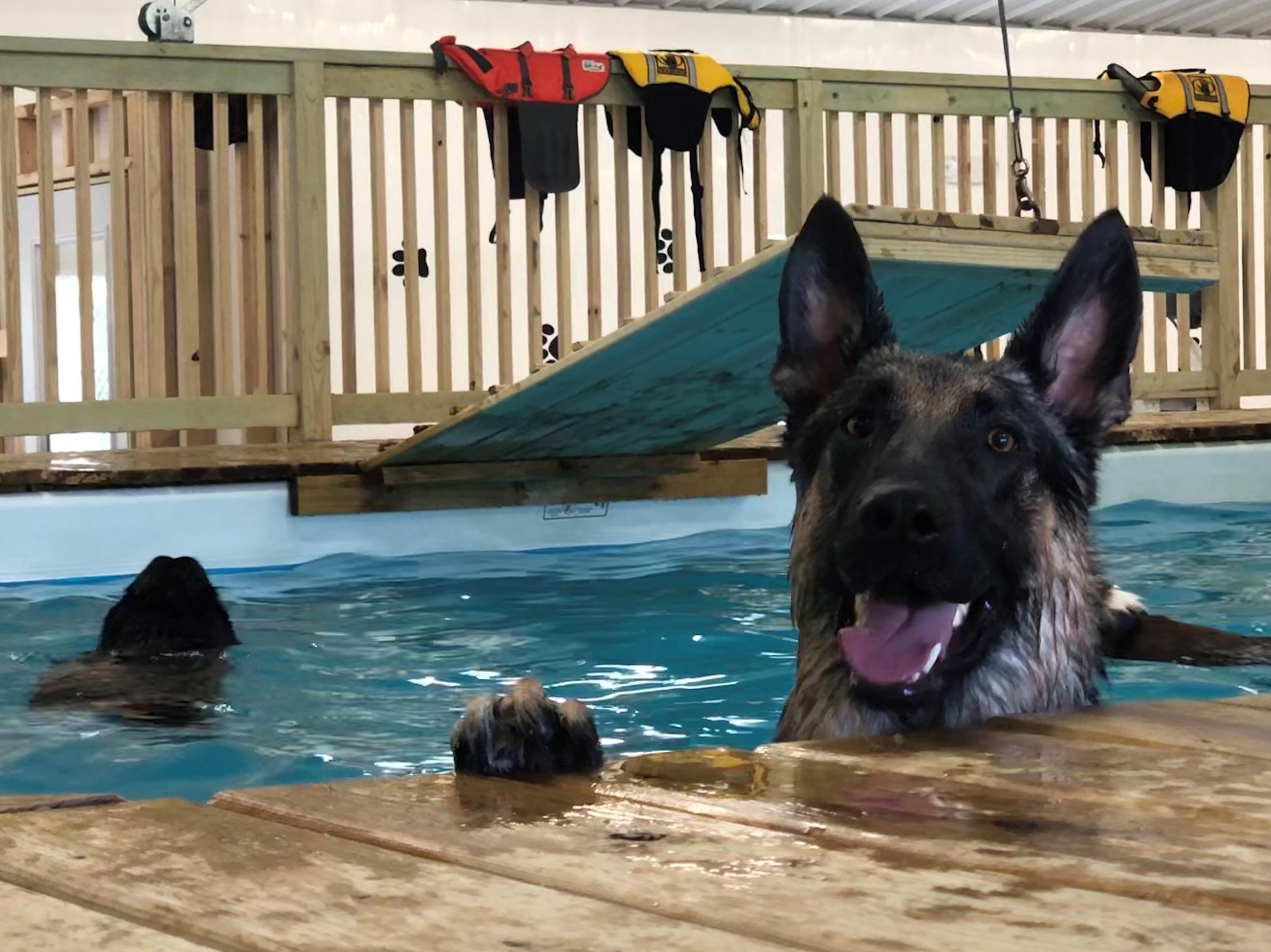 Pool & Swim