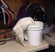Shmello bucket.jpg