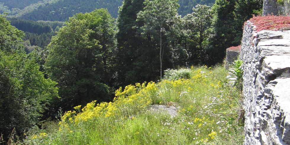 Festival Trail Semois 7 Juillet