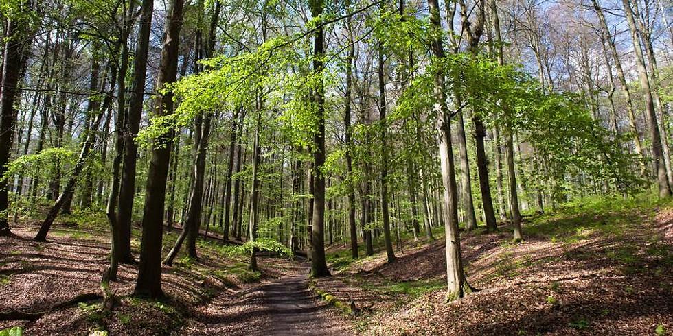 Bois de La Houssière Dimanche 9 Mai