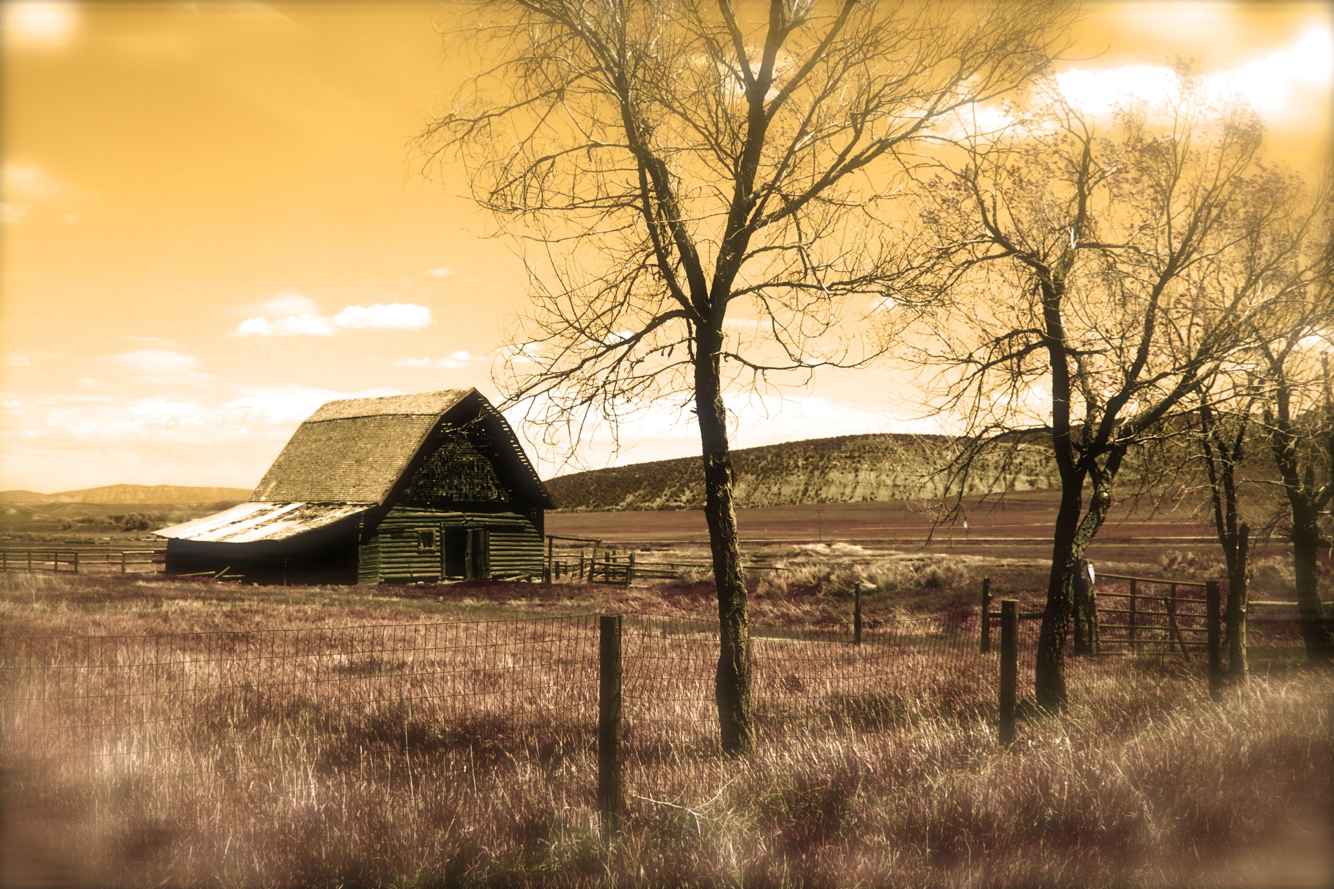 Barn CoWyo