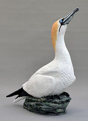 Seagull-Cyd-Jupe-1-215.jpg