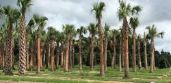 palm2-crop-u3729.jpg