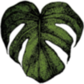 Sama Logo Leaf - Transparent.png