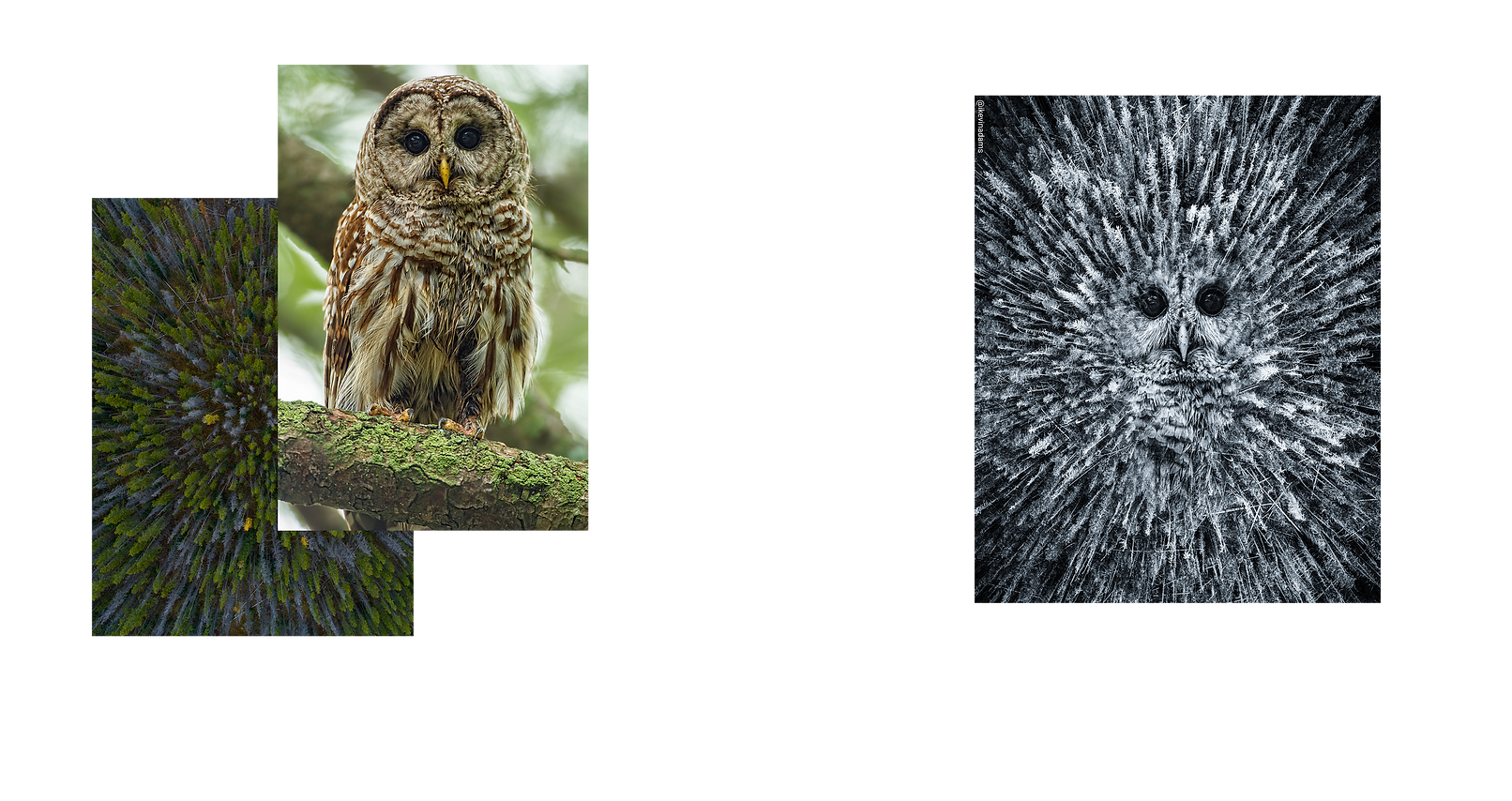 owlcon.png