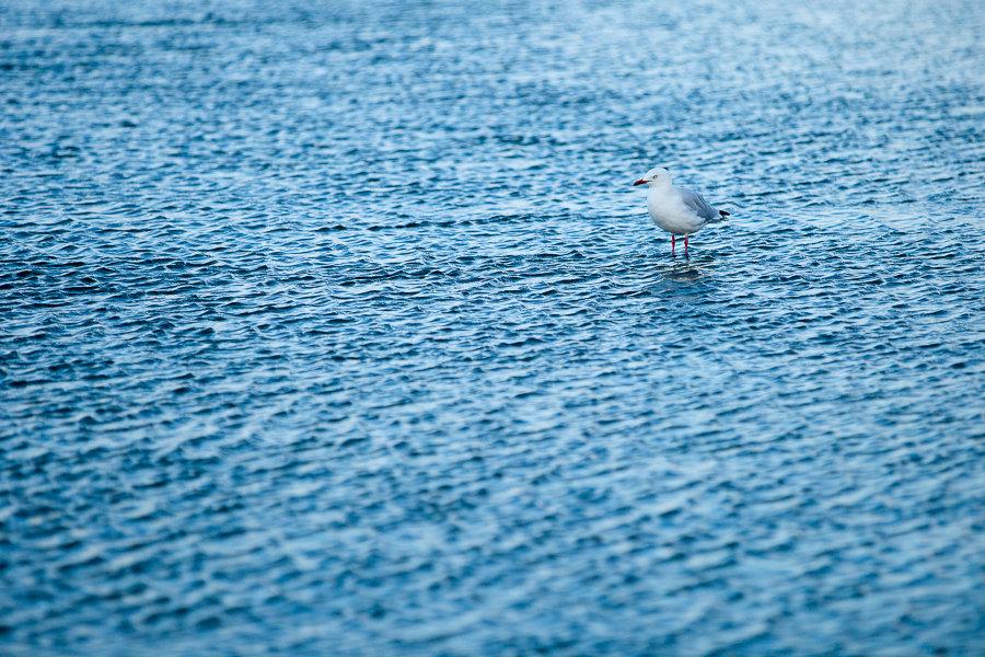 Möwe im Wasser