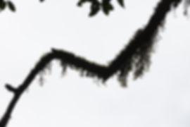Baum Chart