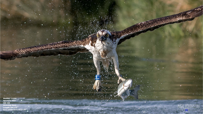 Osprey 1J, Rutland