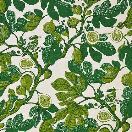 Fanny Shorter Fig Cypress