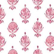 Karanfil Rose Oyster