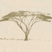 Botswana-Trees-BT-04-Peridot-on-Canvas.-