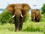 Elephants in theNational park