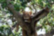 20170918 131707 - Ishasha NP - Uganda.jp
