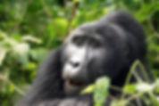 20170921 105459 - Bwindi NP - Uganda-min