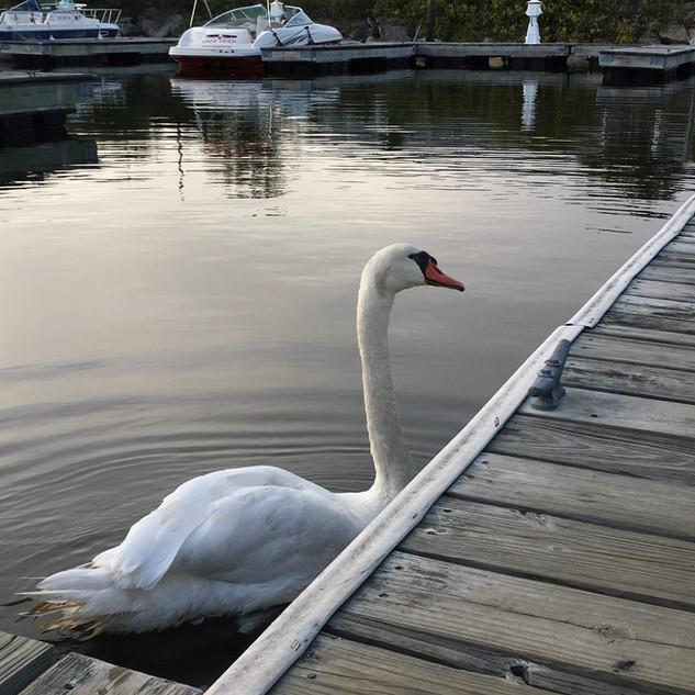A Regular on the Pier