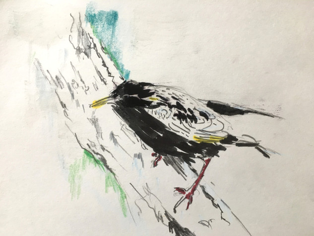 "Watercolor, pencils, on paper 8.5"" x 6.5"""