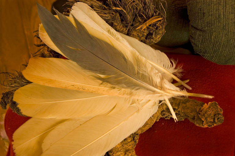 bald eagle feathers8014.jpg