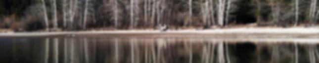 Tree Reflections slice.jpg