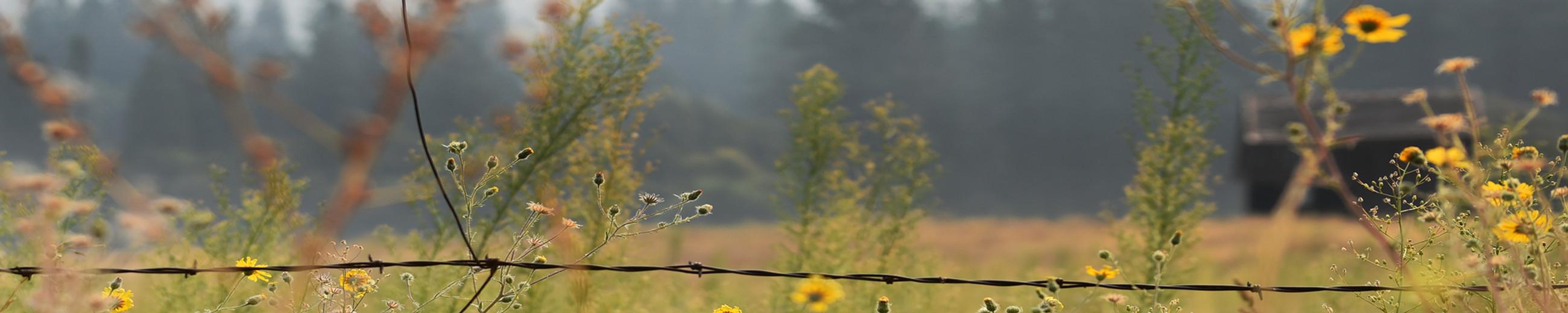 barbwire meadow slice.jpg