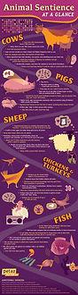 animal-sentience-infographic.jpg