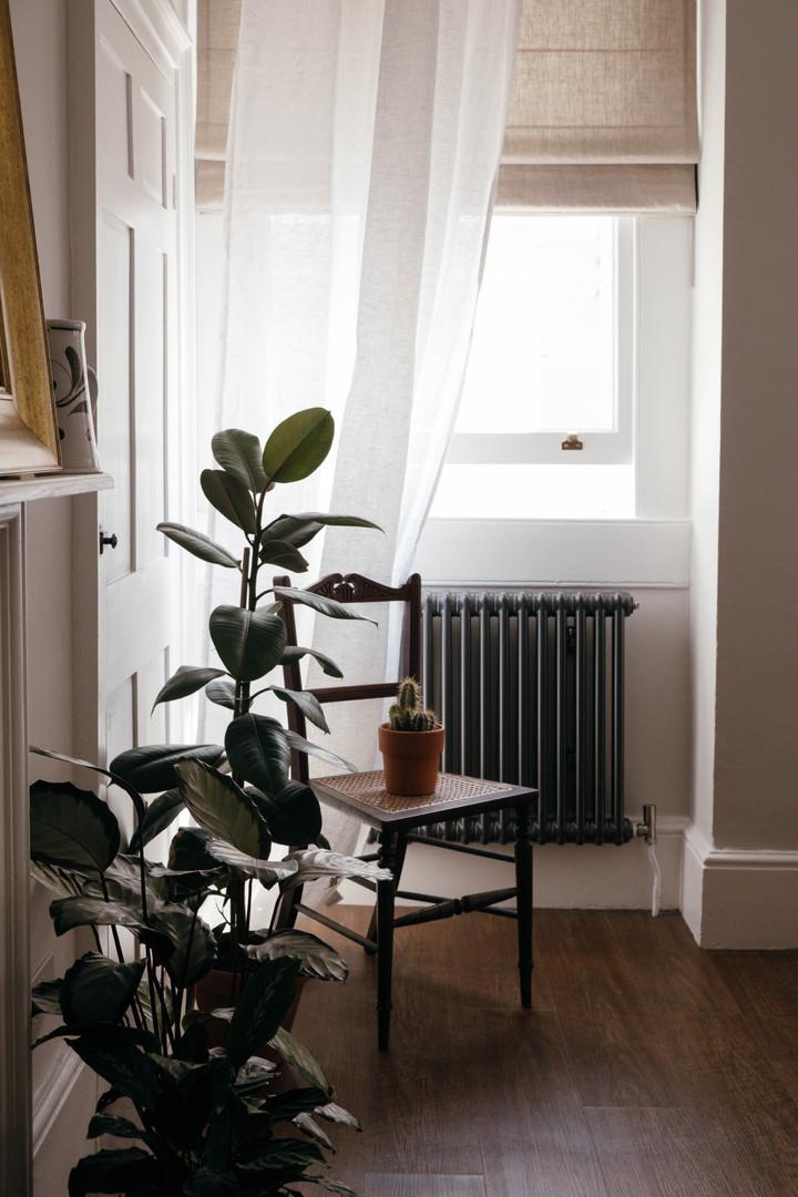 Plants by @botanica_studios