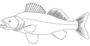 fish_outline.jpg