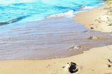 Oscoda Footsteps