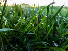 burt lake grass edit.png