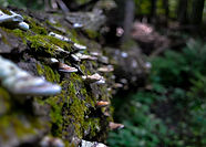 Pictured Rocks mushrooms edit.JPG