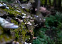Pictured Rocks mushrooms edit.JPG
