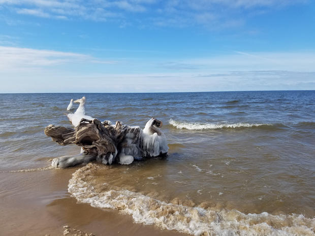 Washed up tree in Grand haven, Michigan