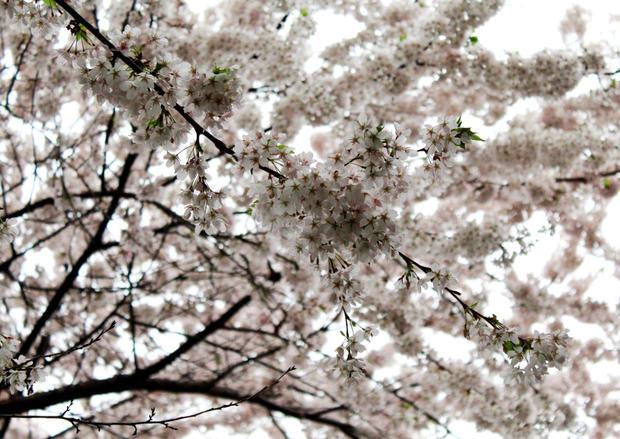 Spring time 2.JPG