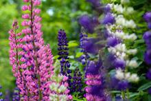 Purple Flowers edit.JPG