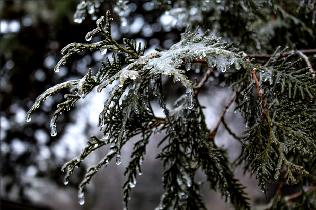 Ice Storm Remnants