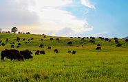 South Dakota Custer SP 9.JPG