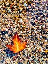floating leaf edit.png