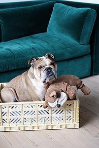 maxi-banana-and-dog-2-scaled.jpeg