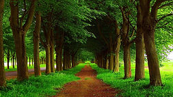 Path in the forest.jpg