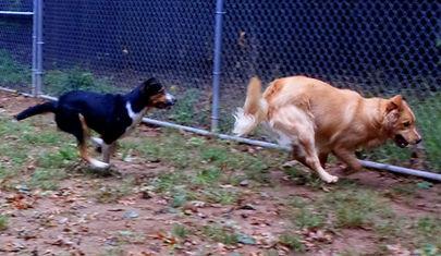 Pups _ Play 6.jpg
