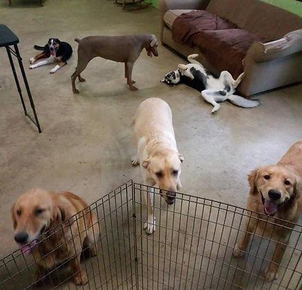 Pups _ Play 2.jpg